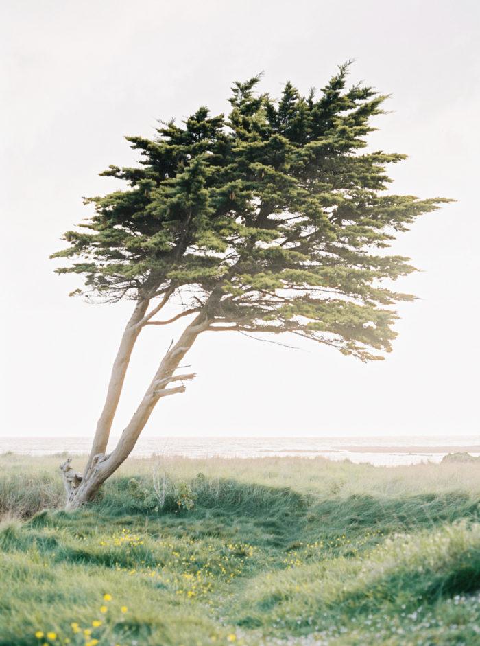 quiet landscape - sylvain marchand - portait naturel - portrait artiste - photographe rouen - normandie - photo argentique - carmencitalab