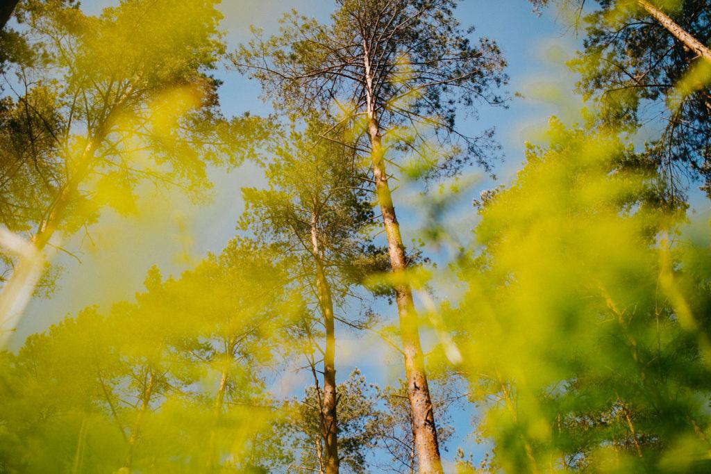 forêt - lumière dure - photographe portrait rouen - sylvain marchand - portraits naturels - photographe lifestyle - seance photo lifestyle - portraits artistiques normandie